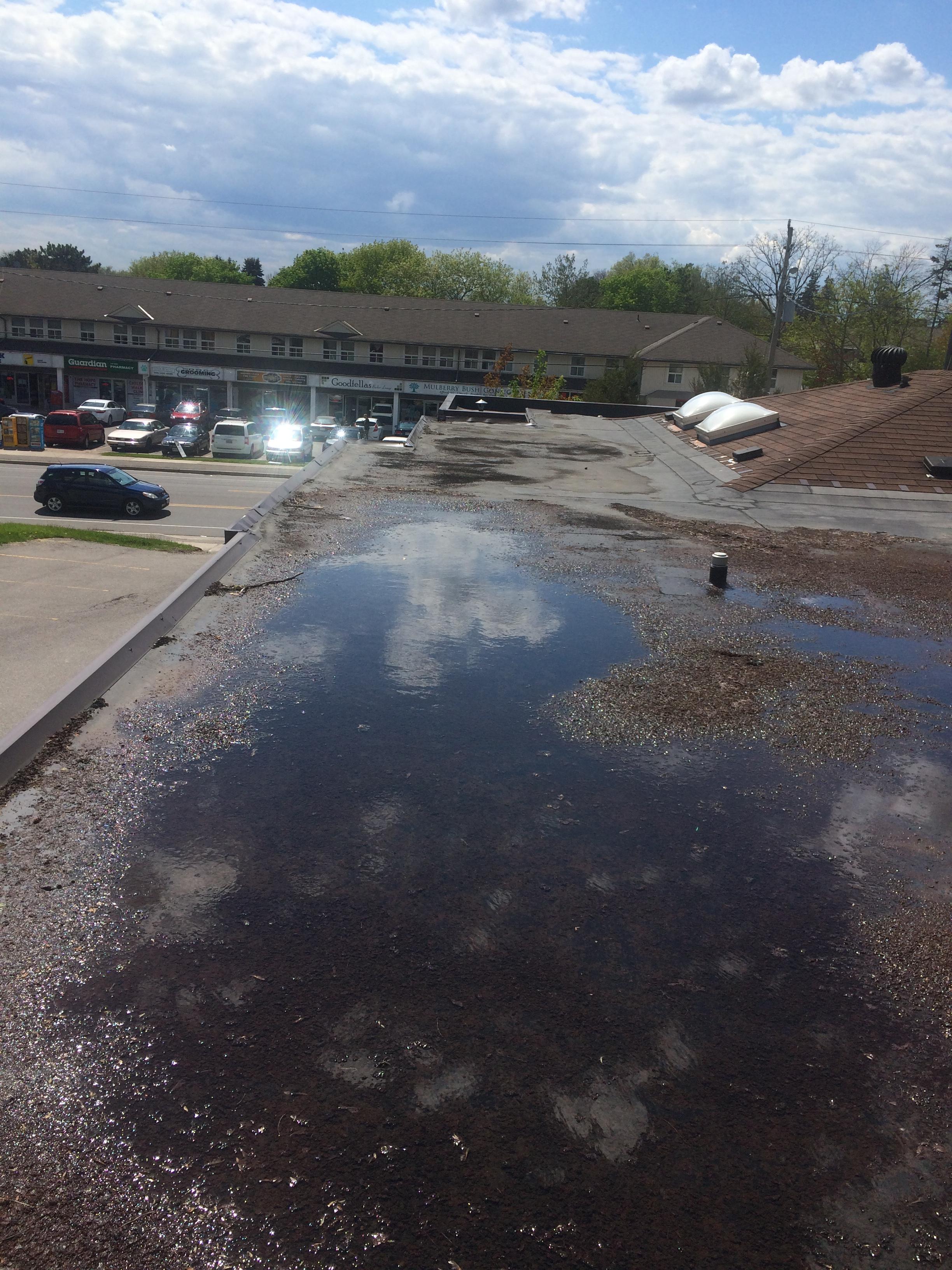 Water Ponding In Flat Roof In Pickering Roofing Repair