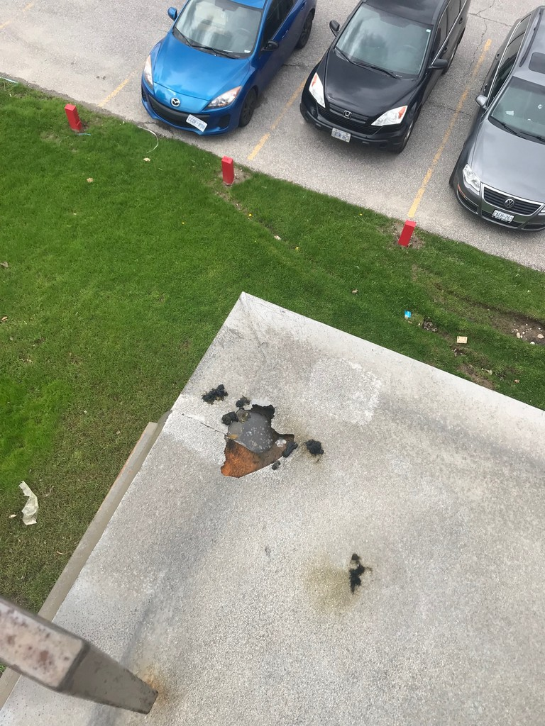 Raccoon damage to flat roof on commercial building in Scarborough