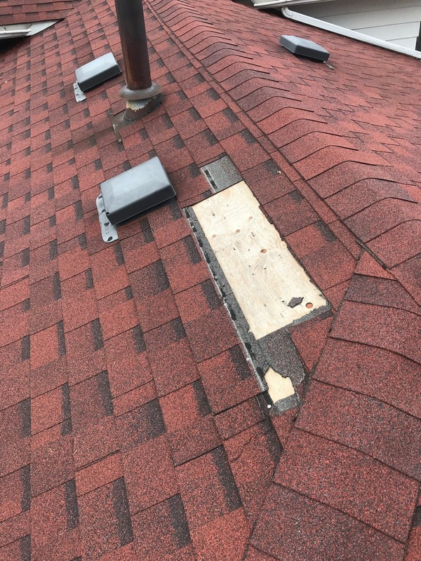 Raccoon damage to shingle roof on residential roof in Scarborough